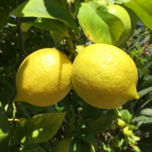 Internetmakelaars Nijmegen, schoonmaken met citroen voor bezichtiging